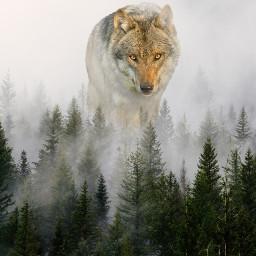 freetoedit simple wolf aweful minute ecgiantanimals