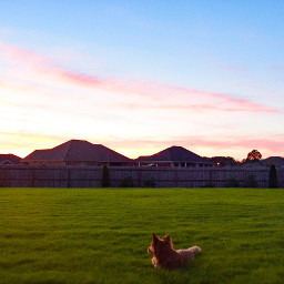 dogs grass dogsofpicsart alabama sunset freetoedit