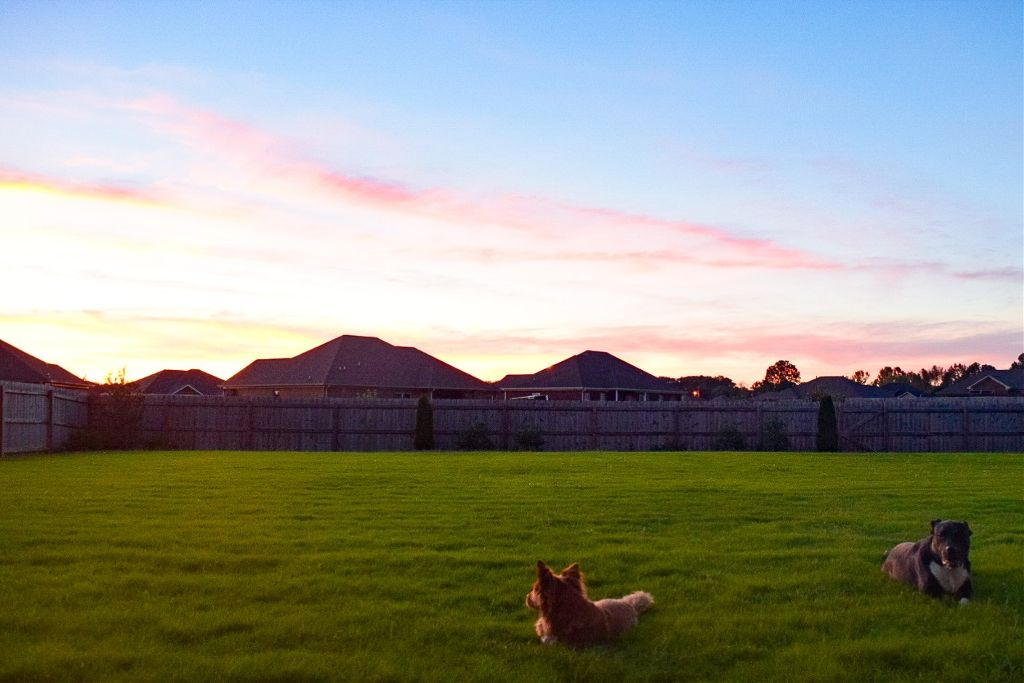 My #dogs love all this #grass 🐕🐾💕 #dogsofpicsart #Alabama #sunset #sky #happydogs  #freetoedit