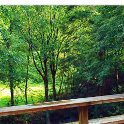 myphotography northcarolina woods railing paint