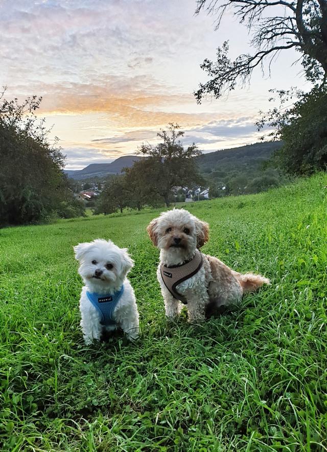 #freetoedit #mydog #dogsofpicsart #doglover #animalsofpicsart