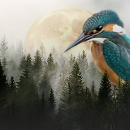bird forrest mystical fantasy madewithpicsart freetoedit ecgiantanimals