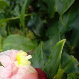 flor flower planta plant pcminimalism