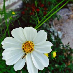 myphoto myhome naturephotography plant flowers freetoedit freetoeditremix