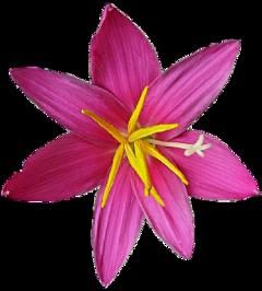 cuorelucymy lucymy mialu flowers flowerslucymy freetoedit