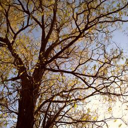 freetoedit autumn autumncolors autumnfeels tress dcautumnleaves