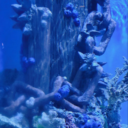 blue fish water color picsart freetoedit freetoeditremix
