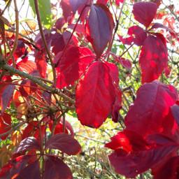 freetoedit myphotography blätter naturephotography september2019