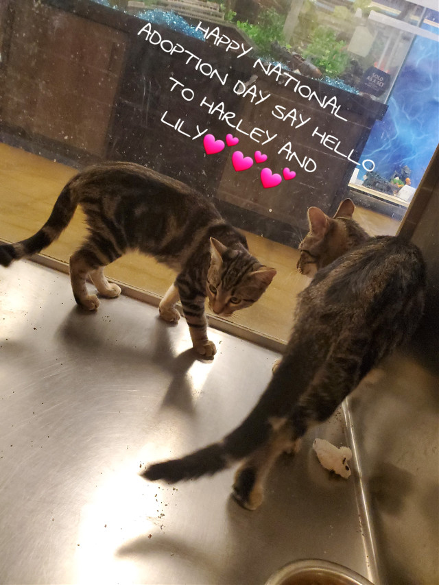 #nationaladdoptionday #cats #catlove #kittys #ilovecats