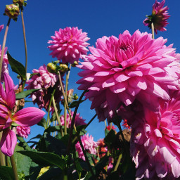 nature photography colorful flowers pink