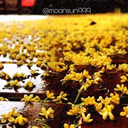 freetoedit photography raining flowers