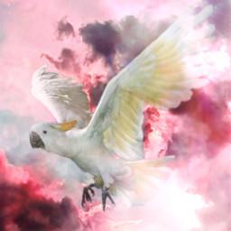 freetoedit parrot pink clouds sky