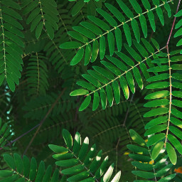 freetoedit leaves greenleaf pcleaves
