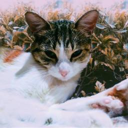 animals cat natural felino