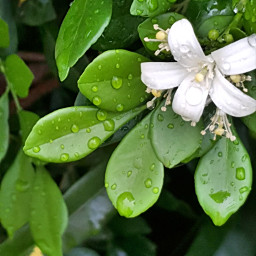 freetoedit pcleaves leaves