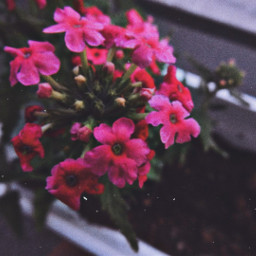 myphotography flowers flower nature blurry freetoedit