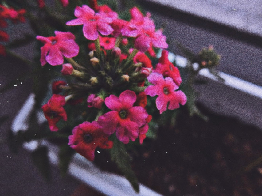 🖤  #myphotography #flowers #flower #nature #blurry #background #freetoedit
