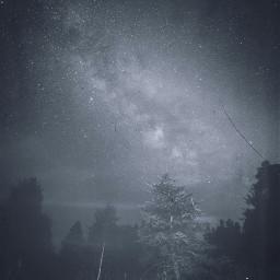 freetoedit stars sky tree forest