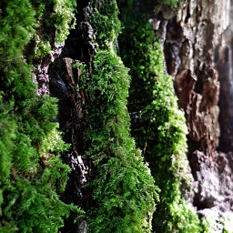 freetoedit moss nature forest myphotography