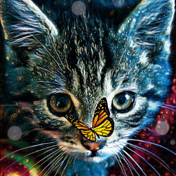 freetoedit kitty cat eyes butterfly