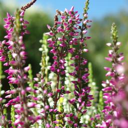 flowers september purple nofilter