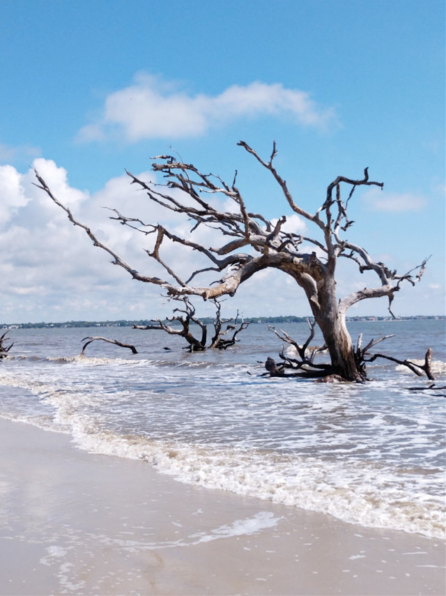 Driftwood Beach on Jekyll Island - #freetoedit #nofilter #nature #outdoors #naturelover #ocean #beach #atlanticocean #driftwood #driftwoodbeach #jekyllisland #travel #vacation #summervibes #happiness