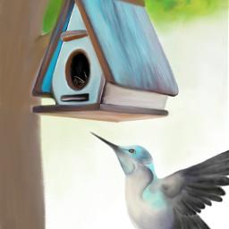 dcbirdhouses birdhouses