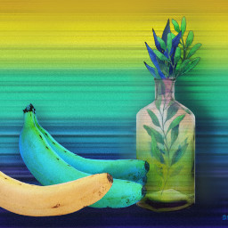 stilllife colorful bananas contemporaryart blueandyellow freetoedit ircbanana