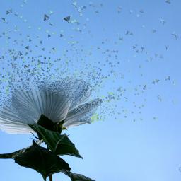 freetoedit dispersiontool dispersion flower bluesky