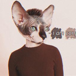 freetoedit aesthetic picsart iamconfusion animalheads