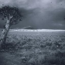 freetoedit tree palmtree desert sand