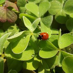 freetoedit nature leaves oxalis sorrel pcleaves