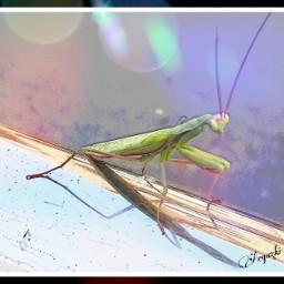 freetoedit udazkena mantis