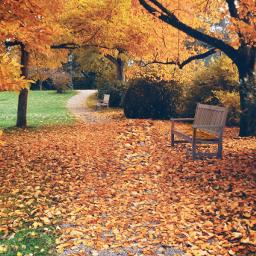 freetoedit autumm fall autumnvibes photography