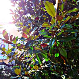 myfoto foglie pcleaves leaves