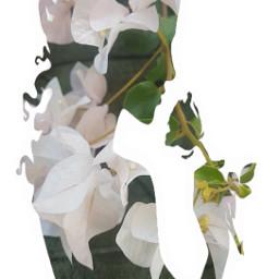 freetoedit begonvil womanpower💪 doubleexposurecontest flower
