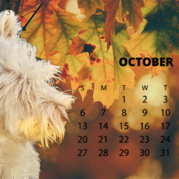 freetoedit october westie westhighlandwhiteterrier