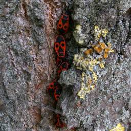 naturephotography bugsandinsects noedit september2019 autumn