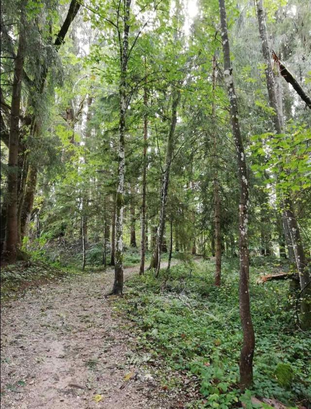 #freetoedit #remix #remixit @picsart #picsart #fte #nature #landscape #forest