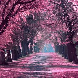 freetoedit background tree trees perple