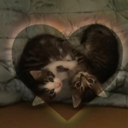 freetoedit cutekitty littlecats kittys littlekitten