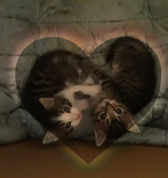 My little cats♥♥♥ #freetoedit #cutekitty #littlecats #kittys #littlekitten