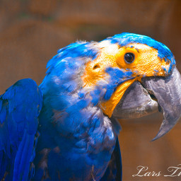 bird parrot naturephotography colorful nikon