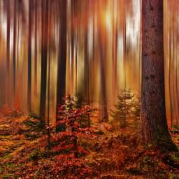 freetoedit nature photography ghostfollowers dontfollowme