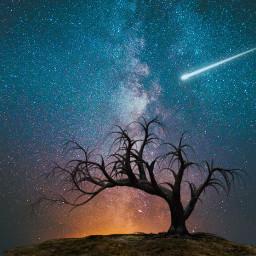freetoedit galaxy lonelytree sky stars