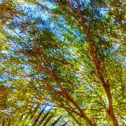 freetoedit autumnfeels