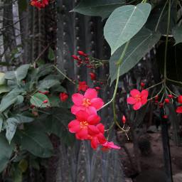 flowers flores beautiful jungle nature freetoedit