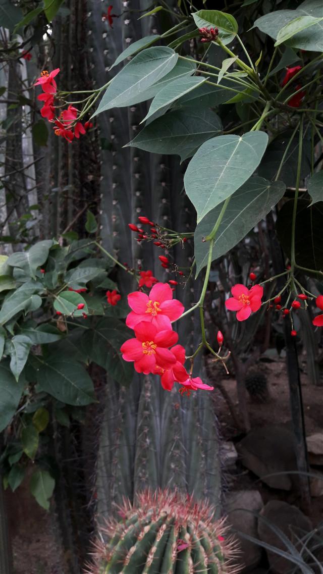 #flowers #flores #beautiful #jungle #nature #naturephotography #lovelyday 🌏🌺   #freetoedit