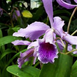 naturephotography lovely beautiful nature orchidea freetoedit