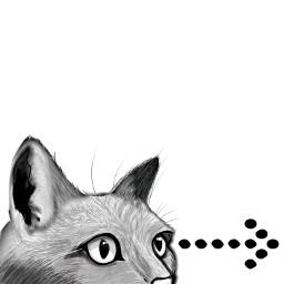cat feline sketch drawing face freetoedit
